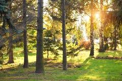 I tronchi degli alberi in autunno parcheggiano alla sera fotografie stock libere da diritti