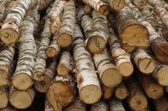 I tronchi degli alberi di betulla abbattuti Immagine Stock