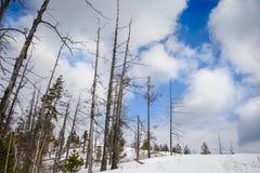 I tronchi degli alberi nelle montagne fotografie stock libere da diritti
