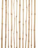 I tronchi di vari spessori di bambù asciutto isolati su briciolo Fotografia Stock