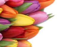 I tulipani fiorisce in primavera o la festa della mamma con copyspace fotografie stock libere da diritti