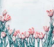 I tulipani il confine, primavera di rosa pastello fiorisce il fondo, vista superiore Disposizione o cartolina d'auguri immagini stock