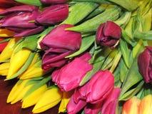 I tulipani leggeri Immagine Stock