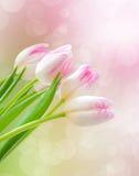 Tulipani rosa fotografie stock