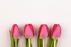 Quattro tulipani rosa Fotografia Stock