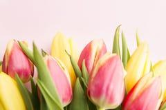 I tulipani si chiudono in su Fotografie Stock