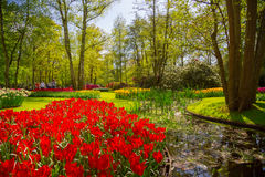 I tulipani variopinti nel Keukenhof parcheggiano, l'Olanda Fotografie Stock Libere da Diritti