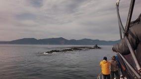 I turisti fotografano l'area naturale specialmente protetta dell'isola di Starichkov con le azione delle colonie degli uccelli ac video d archivio
