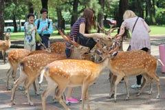 I turisti godono dei biscotti con i cervi su sideway Immagine Stock Libera da Diritti