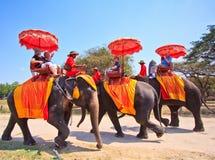I turisti guidano gli elefanti nella provincia di Ayutthaya della Tailandia Fotografia Stock Libera da Diritti
