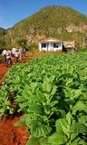 I turisti possono essere piantagione di visita veduta del tabacco in Vinales, Cuba Fotografie Stock