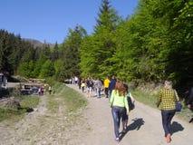 I turisti raggruppano con la guida turistica nelle montagne carpatiche l'ucraina Fotografie Stock