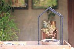 I vasi della pianta, aggiungono il suolo e piantare i piccoli alberi, metta sul pavimento, mostrano la forma della casa fotografia stock libera da diritti