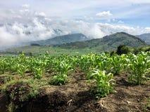 I vasti campi di grano nelle colline del Guatemala, fuori di anti-g fotografie stock libere da diritti