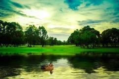 And i vattnet Fotografering för Bildbyråer