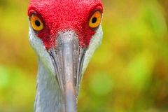 I've got my eye on you Royalty Free Stock Images