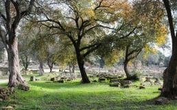 I vecchi alberi nodosi incorniciano le rovine di Olimpia antico con le colonne ed i blocchi sistemati nelle file coperte muschio  fotografie stock