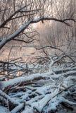 I vecchi alberi si sono rovesciati nel fiume Fotografia Stock