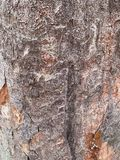 I vecchi precedenti di struttura del tronco di albero fotografia stock libera da diritti