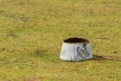 I vecchi rifiuti arrugginiti del ferro, pecora pascolano in Croazia Immagine Stock