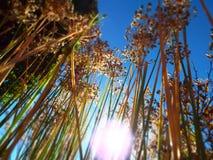 I vermi osservano il punto di vista dei wildflowers secchi alla luce solare diretta Fotografia Stock