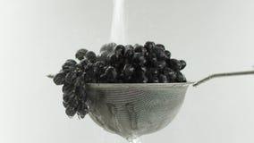 I videoen ser vi druvor i en sikt, vattennedgång uppifrån i stopp för en stråle därefter, vit bakgrund stock video