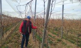 I vingården Arkivbild
