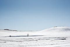 I vinter finns det snö på grässlätten med silverbjörkskogen Royaltyfri Bild