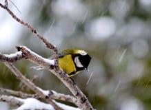 I vinterdåligt väder Arkivbilder