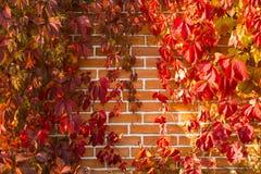 Autumn mood brick wall, wallpapers royalty free stock photos