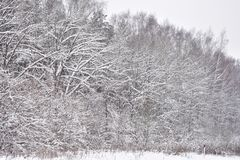 I want to forever admire the magnificent winter nature. A delightful landscape can inspire anyone.I want to forever admire the magnificent winter nature stock photos