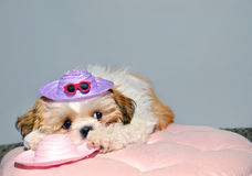 But I Wanted To Wear The Pink Hat! Royalty Free Stock Images