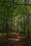 While walking through the forest of Slovenia 6 royalty free stock photography