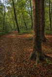 While walking through the forest of Slovenia 7 stock photos