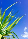 Spring Flower, Queensland, Australia. I was very grateful for the shade this beautiful palm tree provided. On a scorching day in he gold coast Australia. I love Royalty Free Stock Photos