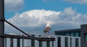I am watching you - seagull at the sea stock photo