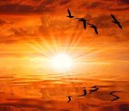 I waterbirds delle siluette sotto il sole Immagine Stock