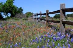 I wildflowers del Texas e di legno recintano la primavera Fotografie Stock