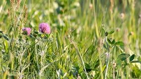 I Wildflowers e l'erba si sviluppano sul prato Giorno di estate pieno di sole archivi video