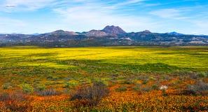 I wildflowers eccellenti della molla della fioritura abbelliscono il panorama fotografia stock