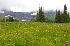 I Wildflowers si sviluppano sotto i ghiacciai in Glacier National Park fotografia stock libera da diritti