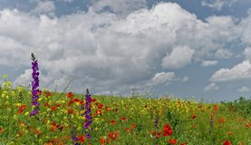 I Wildflowers sistemano in maggio immagine stock libera da diritti