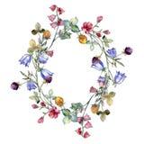 I Wildflowers stampano il fiore botanico floreale Insieme dell'illustrazione del fondo dell'acquerello Quadrato dell'ornamento de illustrazione vettoriale
