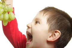 I will eat you. Boy going to eat grapes isolated over white Stock Images