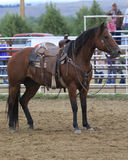 I will just stand here. Roping Horse waiting for rider to return Stock Photography