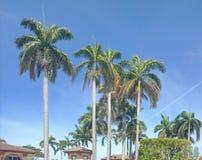 I wonder a tall palm tree with a blue sky. stock photography