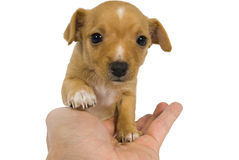 I am your friend. Dog a Hand Stock Images