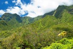 Iao谷毛伊的夏威夷国家公园 库存照片