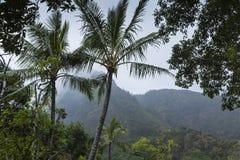 Iao谷毛伊的夏威夷国家公园 免版税库存图片