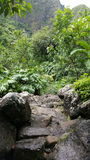 Iao forest. Iao valley forest Stock Photography